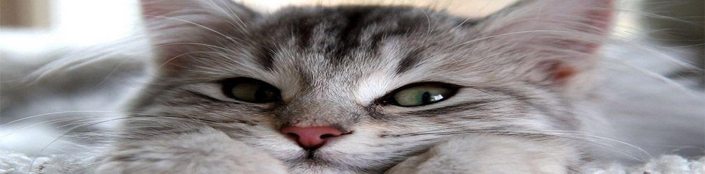 Кот - лучший друг геймера