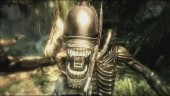 "Alien vs Predator ""Death Blows"""